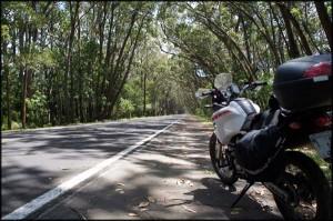 Túnel Verde, em Capivari do Sul